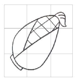 玉米-学习简笔画-中国儿童资源网