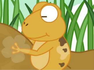 青蛙家蓋好了嗎