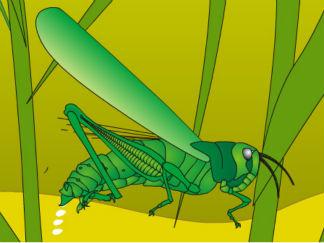 农民的敌人-蝗虫