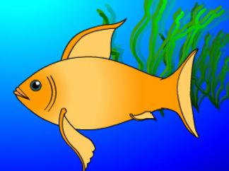 鱼都是卵生的吗