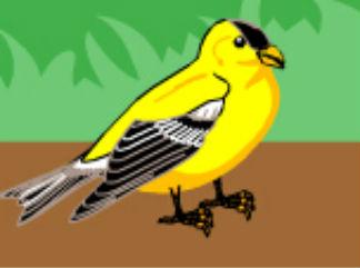 小鸟发烧了?