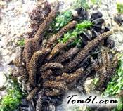 褐藻图片3