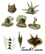 甲藻图片1