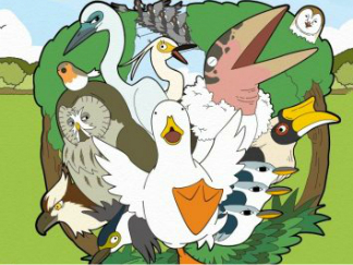 鸭子的生活