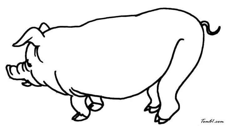 猪49图片