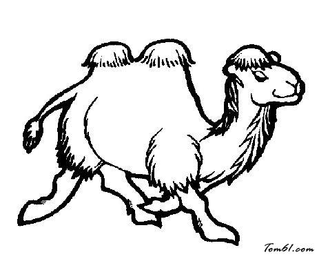 骆驼马桶水箱水满漏水图解