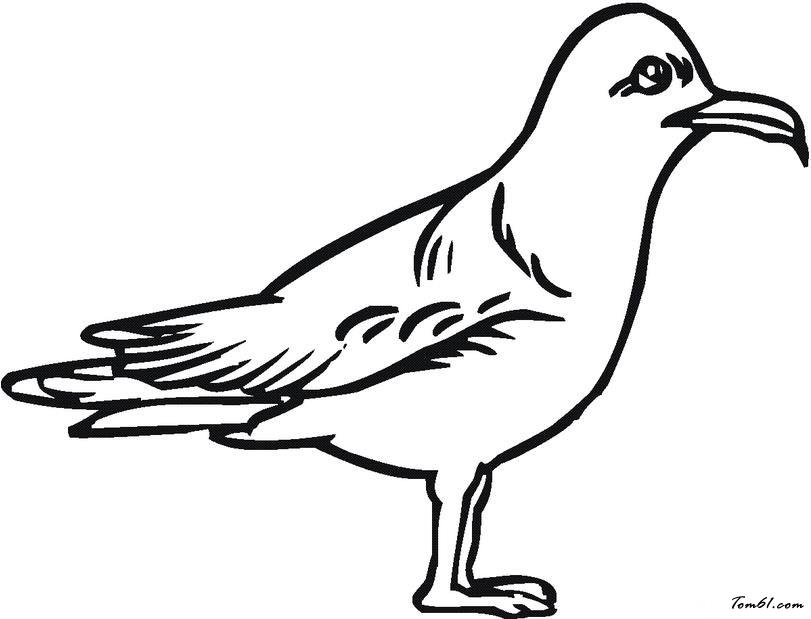 海鸥具象画设计图