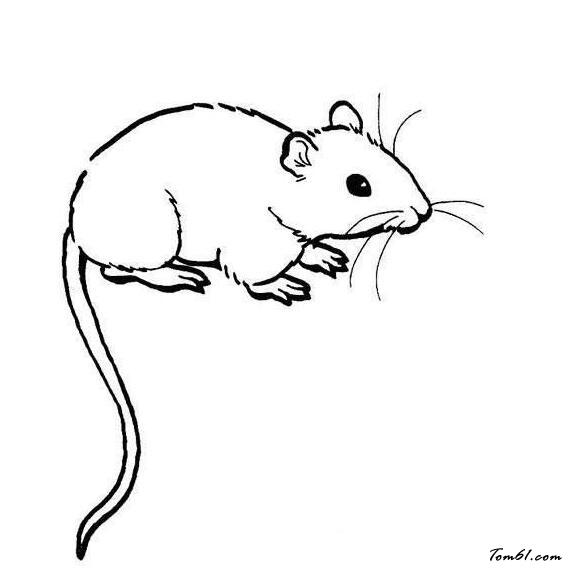老鼠爬松子松树