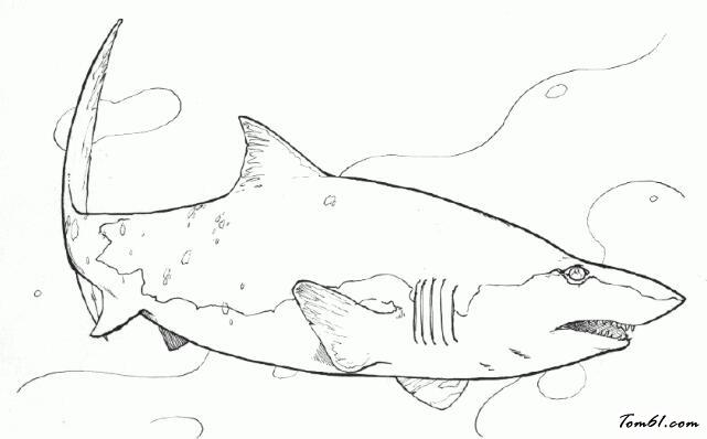 手绘鲨鱼人图片大全
