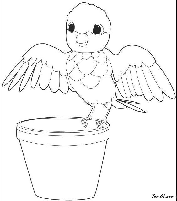 鹦鹉素描简笔画步骤