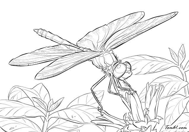 蜻蜓14图片_简笔画图片_少儿图库_中国儿童资源网