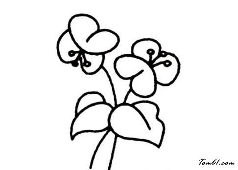 蝴蝶兰3图片_简笔画图片_少儿图库_中国儿童资源网