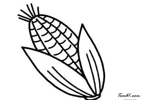 玉米7图片