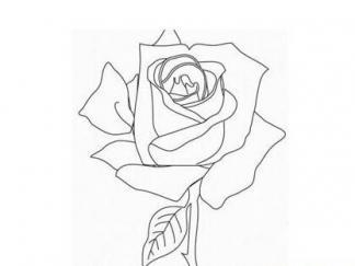 玫瑰花12图片 简笔画图片 少儿图库