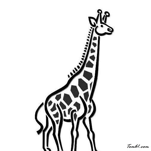 长颈鹿15