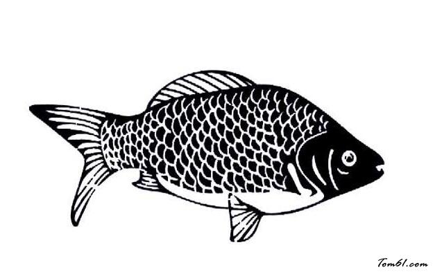 荷花鲫鱼矢量图