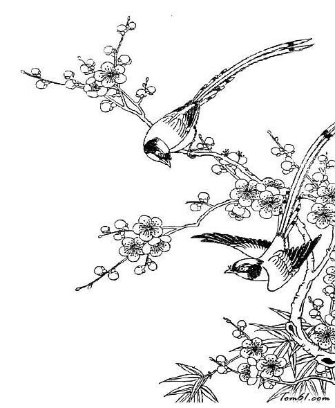 梅花绶带鸟