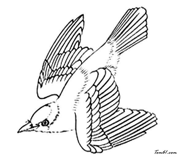 黄鹂的简笔画图片