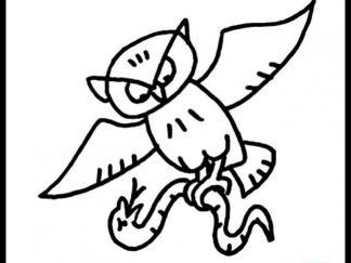 可爱猫头鹰16