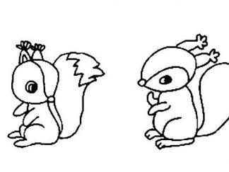 松鼠1518