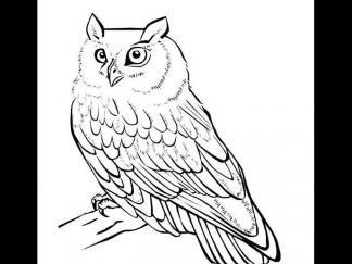 可爱猫头鹰11