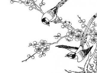 梅花绶带鸟1