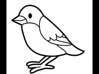 站立的小鸟1