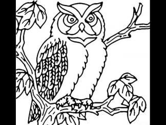 可爱猫头鹰8