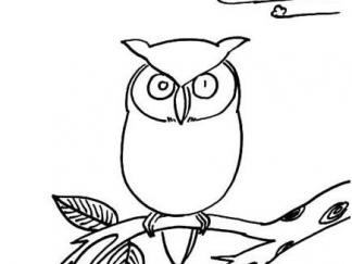 可爱猫头鹰9