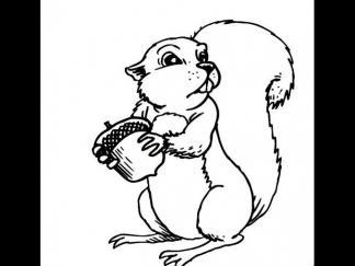 松鼠1512