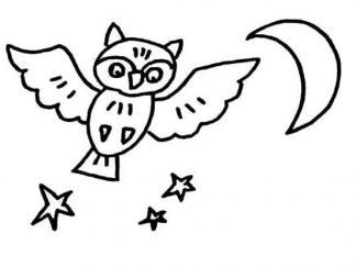 可爱猫头鹰13