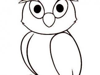 可爱猫头鹰6