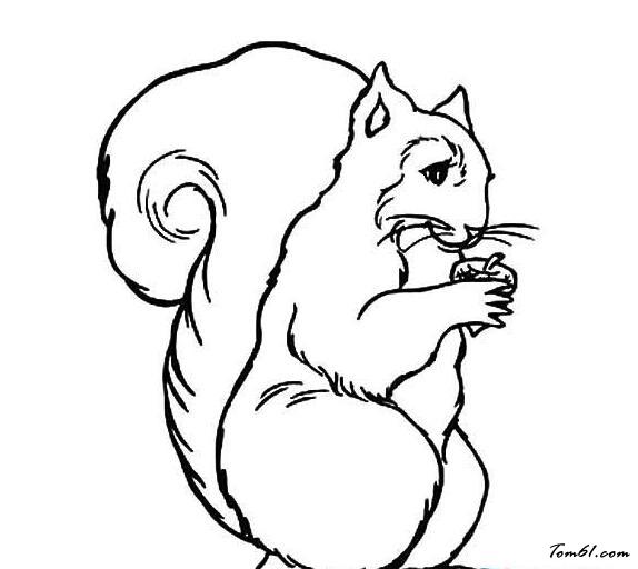 吃松果的松鼠