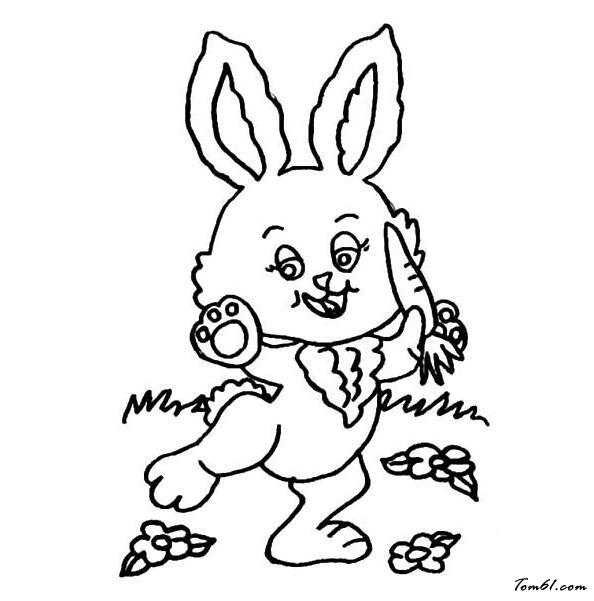 小兔子6图片