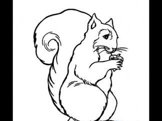 吃松果的松鼠1