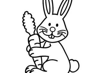 小兔子62