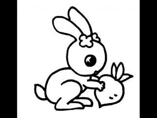 小兔子63