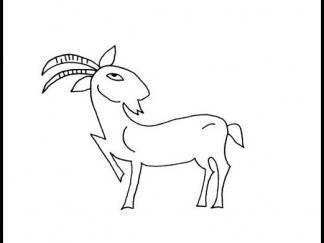 小山羊24