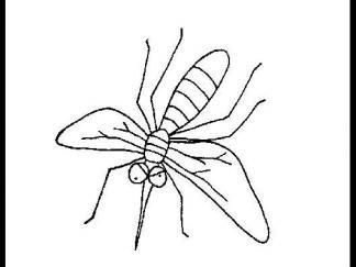 蚊子510