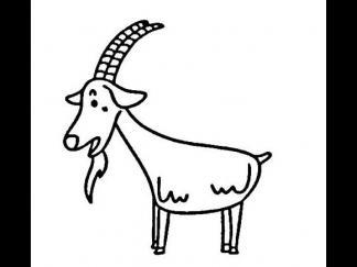小山羊22