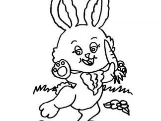 小兔子61
