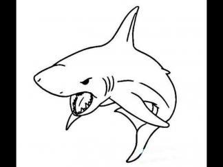 大鲨鱼23