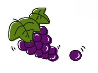 葡萄4图片