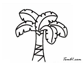 芭蕉树图片