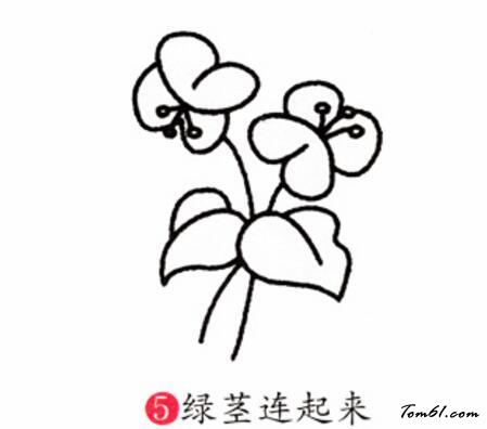 蝴蝶兰2图片_学习简笔画_少儿图库_中国儿童资源网