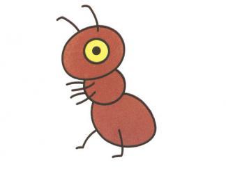 小蚂蚁26