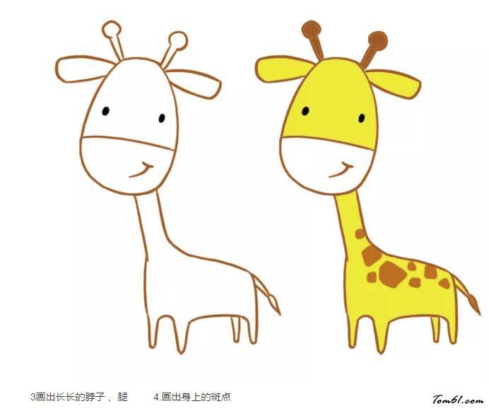 长颈鹿17