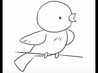 小鸟146