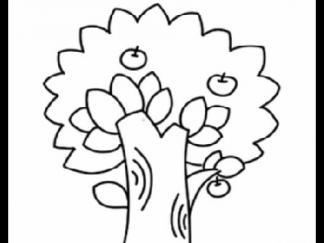 苹果树55
