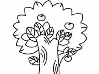 苹果树56